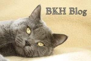 BKH Blog