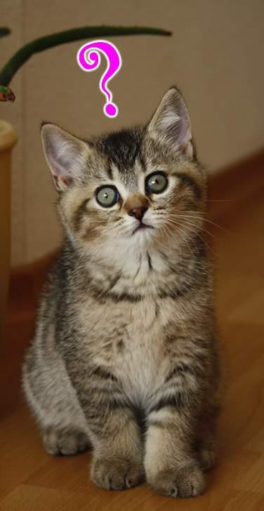 Katzen Fernhalten Von Möbeln : britisch kurzhaar kaufen worauf achten beim kauf von bkh katzen ~ Sanjose-hotels-ca.com Haus und Dekorationen
