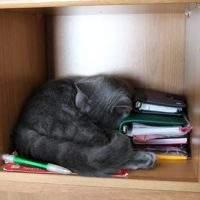 Katzen-Lieblingsschlafplätze