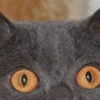 Können Katzen im Dunkeln sehen?