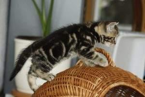 Erziehung Katzen