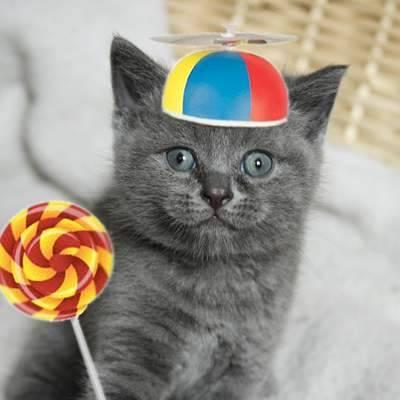 Wie alt ist ihre Katze in Menschenjahren?