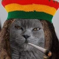 Wie wirkt Katzenminze?