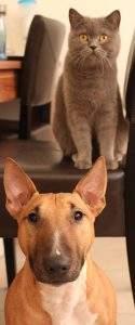 Hunde- oder Katzentyp?