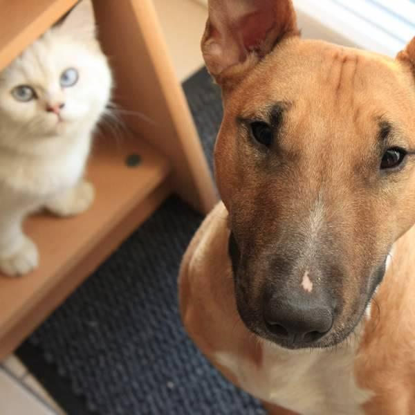 Sind Sie ein Hunde- oder Katzentyp?