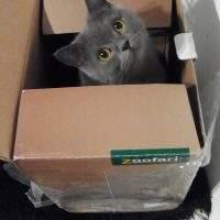 Wieso mögen Katzen Kartons so sehr