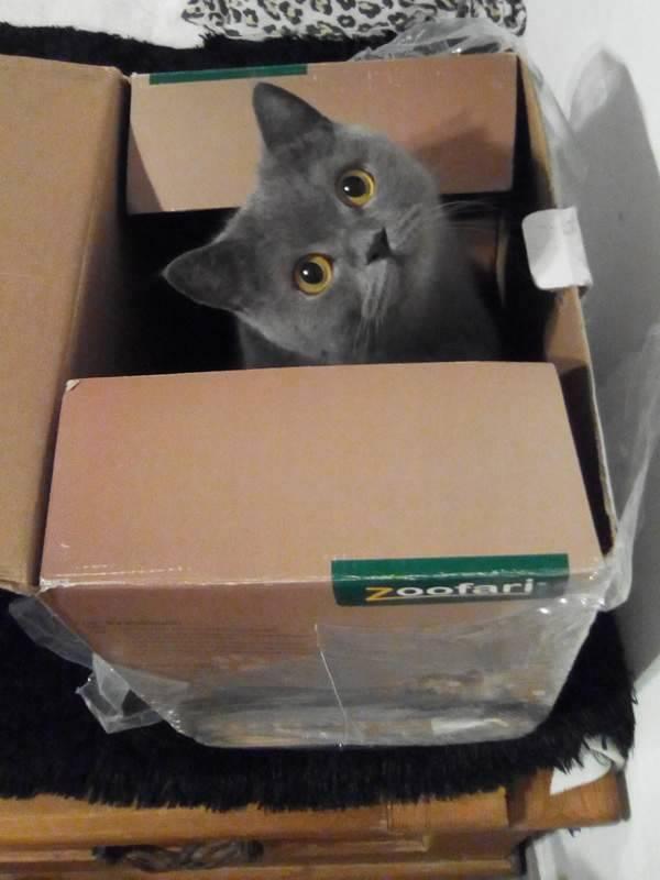 Warum lieben Katzen Kartons?